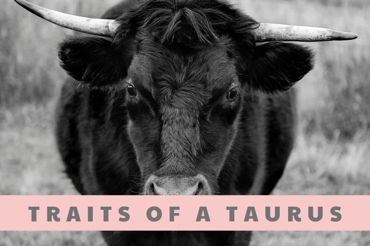 The Traits Of A Taurus